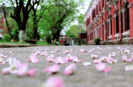 Kết quả hình ảnh cho hoa đào sân trường